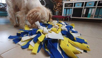 Le tapis de fouille pour chien